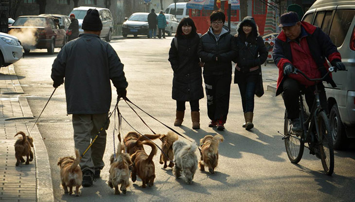 Walking Dogs in Beijing
